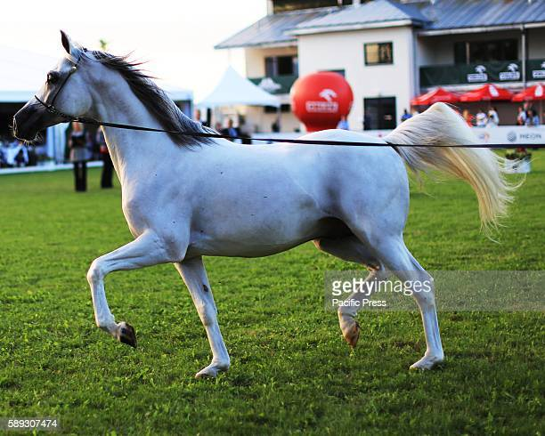 The 2016 'Pride of Poland' annual festival of world class Arabian horses officially began on August 12 in Janów Podlaski Poland World class Arabian...