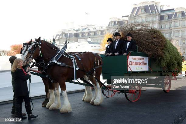 The 2019 White House Christmas Tree is delivered on a horsedrawn carriage from Mahantongo Valley Farms in Pennsylvania at the North Portico of the...