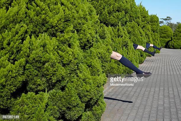 the 3 girl's legs showing from shrubbery - ハイソックス ストックフォトと画像