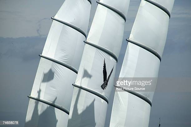 The 3 masted 886m contemporary sailing yacht Maltese Falcon owned by Tom Perkins practices manoeuvres in preparation for The Superyacht Cup Ulysse...
