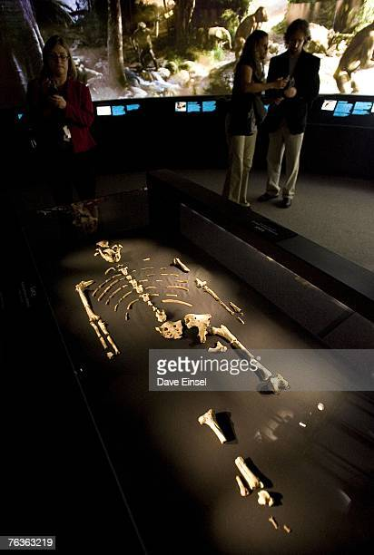 "The 3.2 million year old fossilized remains of ""Lucy"", the most complete example of the hominid Australopithecus afarensis, is displayed at the..."