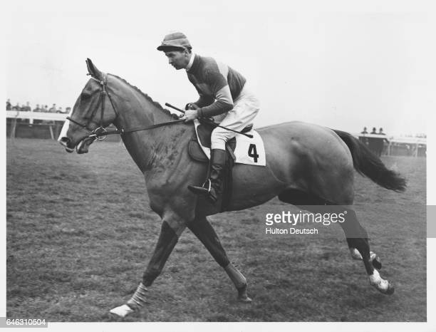 The 33yearold Champion National Hunt jockey and writer Dick Francis riding Mont Tremblant in 1953