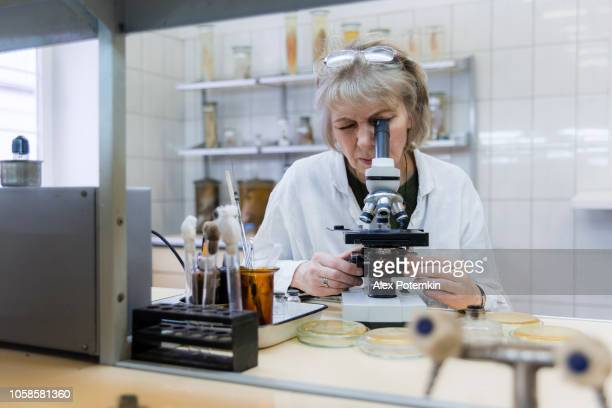 the 50-years-old attractive seriose woman, scientist, working with the microscope and bacterial culture in the college microbiology lab - bacterium stock pictures, royalty-free photos & images