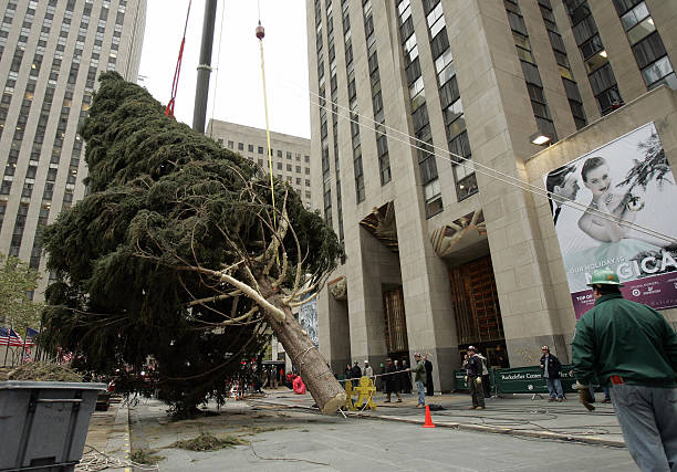 Workers Set Up Christmas Tree In NYC's Rockefeller Center