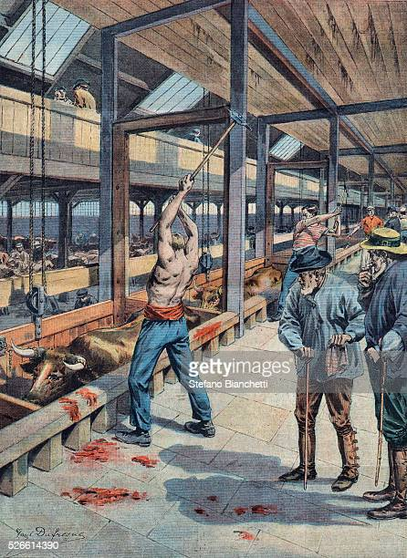 The abattoirs of Chicago USA Illustration from French newspaper Le petit parisien June 2nd 1907