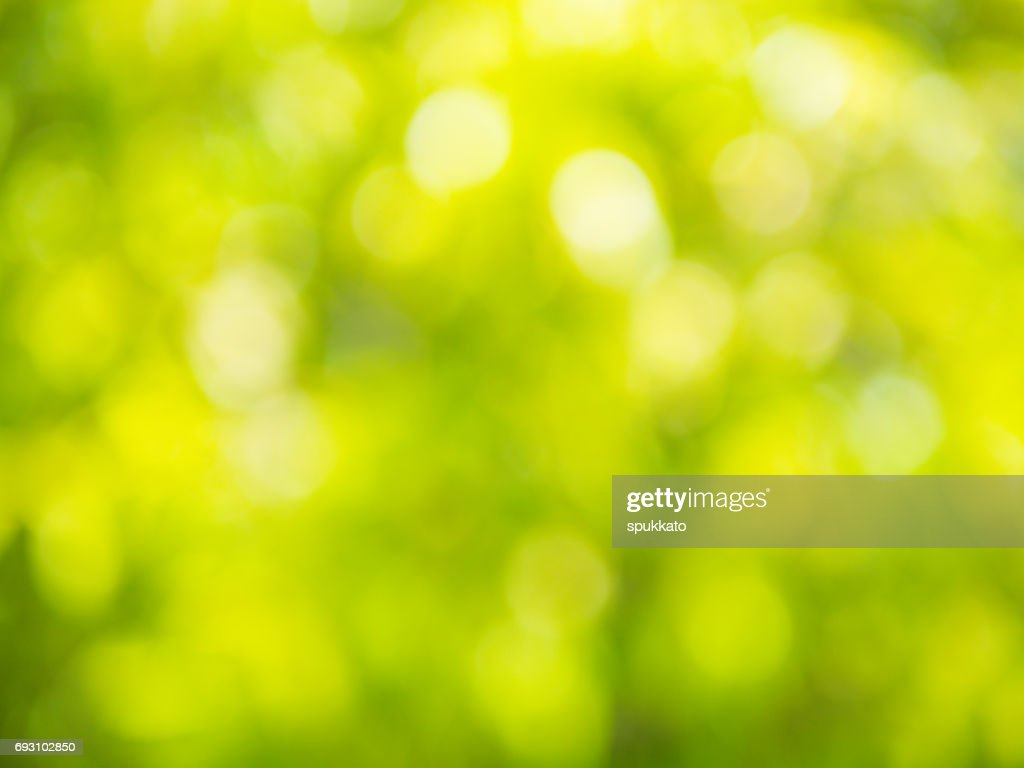 The Abstract Background Of Natural Light Bokeh From Leaves With ...
