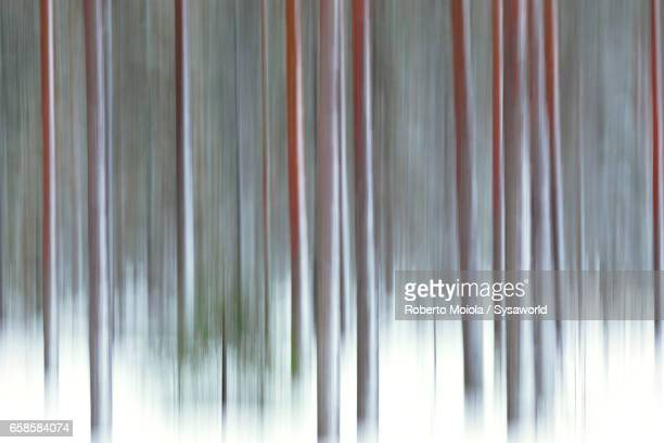 The abstract details of tree trunks Rovaniemi Lapland Finland