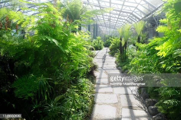 the abundance of beautiful trees or plants in the glasshouse in summertime - tropische boom stockfoto's en -beelden