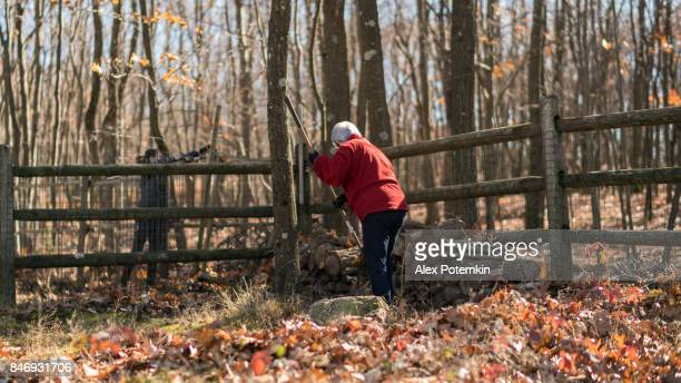the active senior, 65-years-old, silver haired woman removing leaves at the backyard - 65 69 years stock pictures, royalty-free photos & images