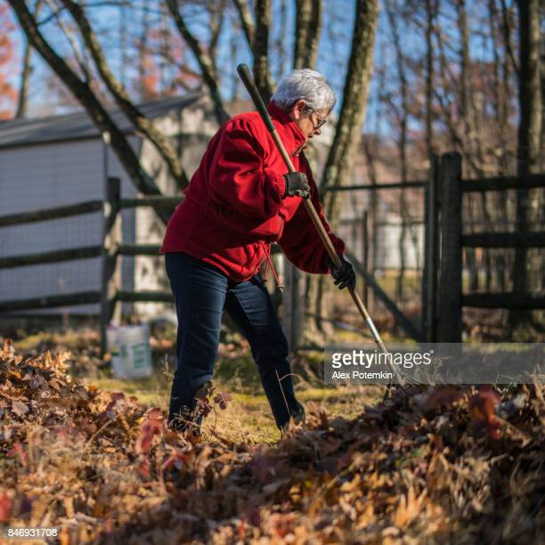 The active senior, 65-years-old, silver haired woman removing leaves at the backyard