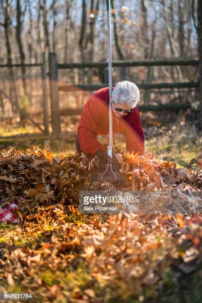 the active senior, 65-years-old, silver haired woman removing leaves at the backyard - 65 69 years stock photos and pictures