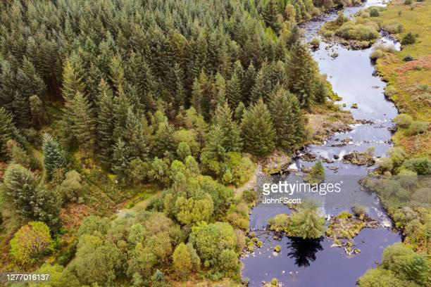 the aerial view of a river flowing next to a pine forest in rural scotland - johnfscott stock pictures, royalty-free photos & images