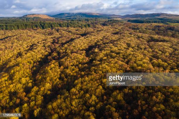 the aerial view of an area of woodland in dumfries and galloway south west scotland captured on a winter morning - forest stock pictures, royalty-free photos & images