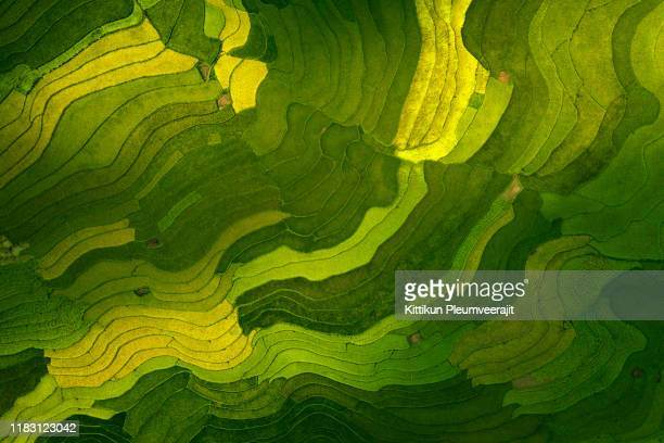 the aerial view of rice field pattern top view - environment stock pictures, royalty-free photos & images