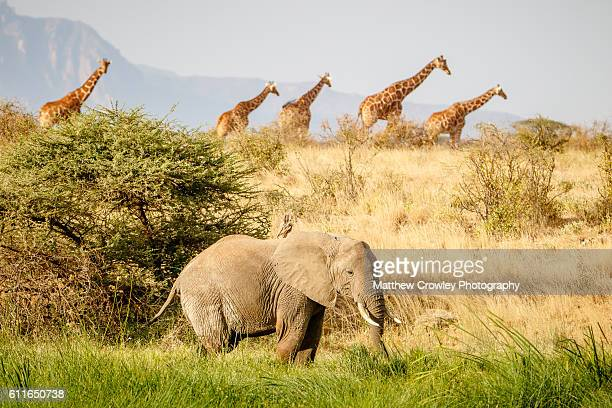 the african wild - nairobi stock pictures, royalty-free photos & images