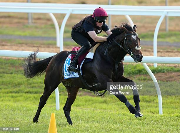 The Aidan O'Brien trained Kingfisher works during a trackwork session for international horses competing in the 2015 Melbourne Cup at Werribee...