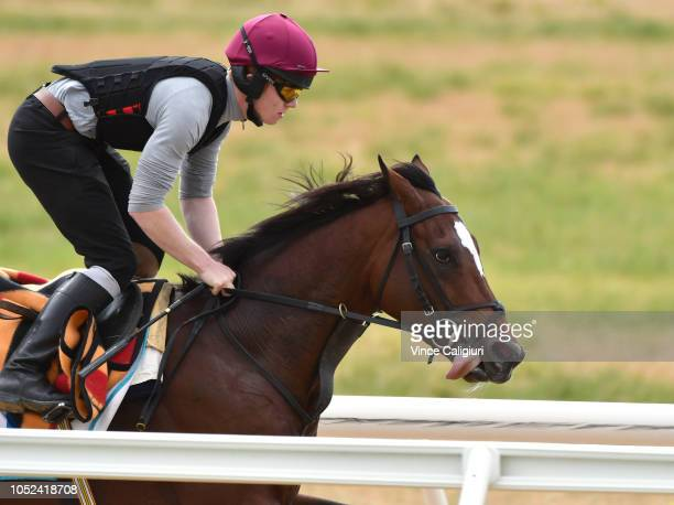 The Aidan O'Brien trained Rostropovich galloping on the all weather track during a Werribee trackwork session at Werribee Racecourse on October 18...