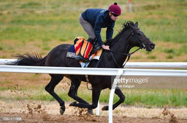 The Aidan O'Brien trained The Cliffsofmoher galloping on the all weather track during a Werribee trackwork session at Werribee Racecourse on October...