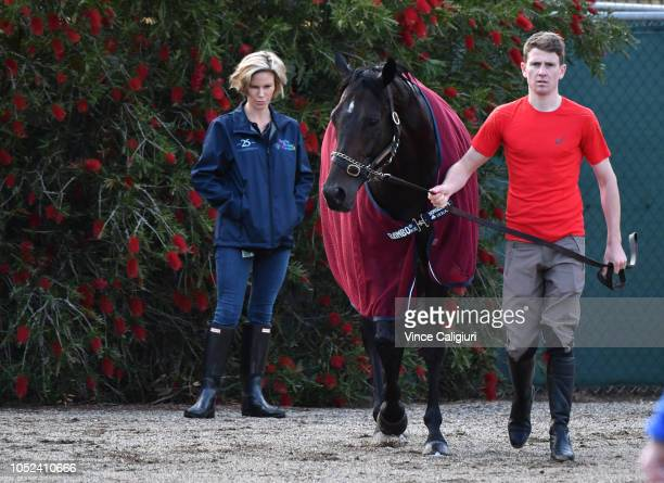 The Aidan O'Brien trained The Cliffsofmoher is seen after a Werribee trackwork session at Werribee Racecourse on October 18 2018 in Melbourne...