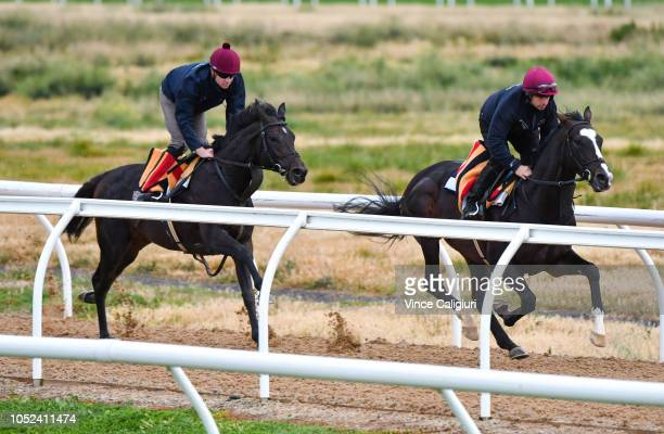 The Aidan O'Brien trained Yucatan and The Cliffsofmoher galloping on the all weather track during a Werribee trackwork session at Werribee Racecourse...