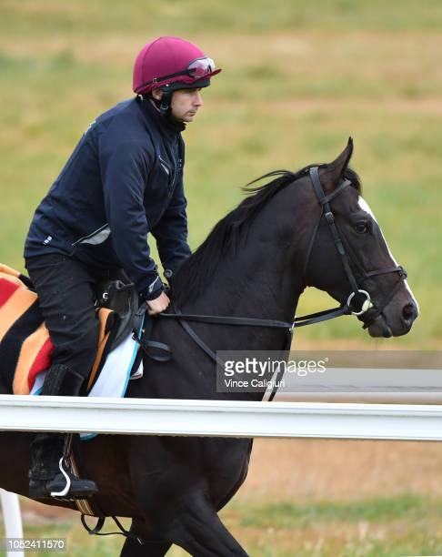The Aidan O'Brien trained Yucatan galloping on the all weather track during a Werribee trackwork session at Werribee Racecourse on October 18 2018 in...
