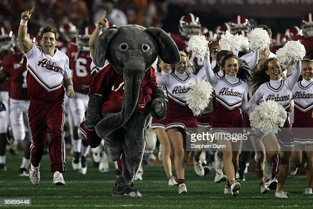 The Alabama Crimson Tide cheerleaders and mascot run out on the field prior to the game against the Texas Longhorns in the Citi BCS National...