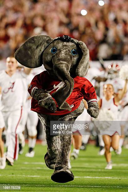 The Alabama Crimson Tide mascot runs on the field during the 2013 Discover BCS National Championship game at Sun Life Stadium on January 7 2013 in...