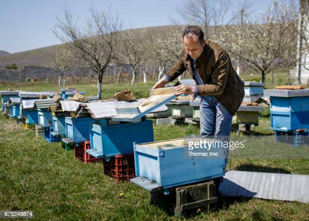 The Albanian farmer Roland Cela is examing his beehives With the support of the GIZ he was able to modernize his farm on March 29 2017 in Kruma...