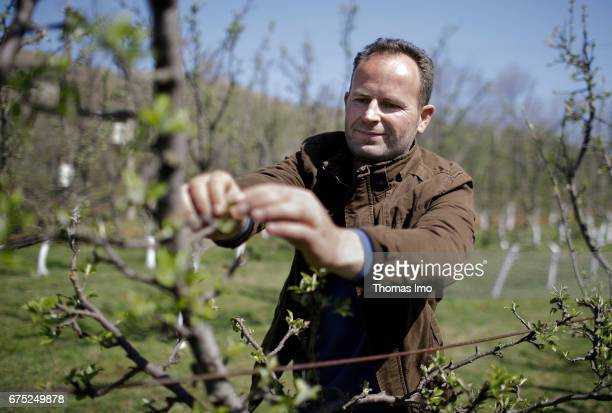 The Albanian farmer Roland Cela is examing his fruit trees With the support of the GIZ he was able to modernize his farm on March 29 2017 in Kruma...