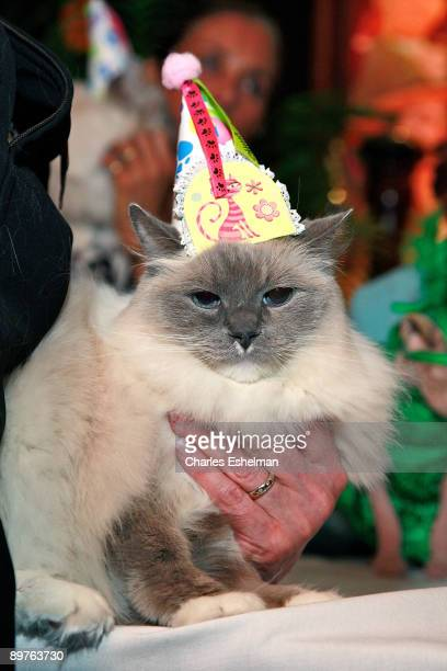 The Algonquin Hotel's resident cat Matilda attends her birthday celebration at The Algonquin Hotel on August 12, 2009 in New York City.