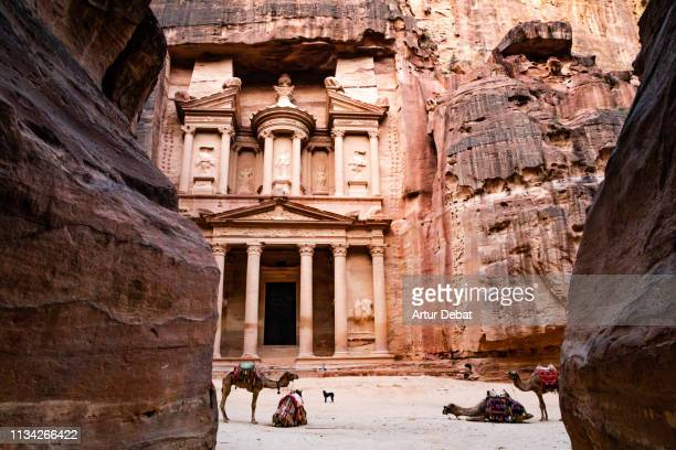 the al-khazneh tomb in the city of petra with colorful camels. - 遺跡 ストックフォトと画像