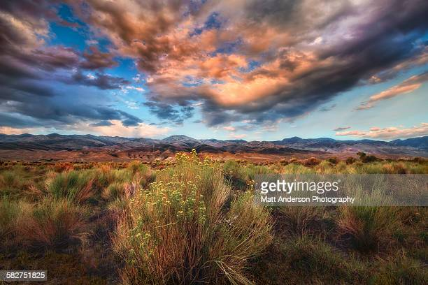 the all american landscape - sagebrush stock pictures, royalty-free photos & images