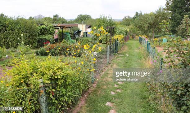 The allotment garden area 'Mountain Peace' is pictured in Sangerhausen Germany 04 September 2013 Four years after the crime a 60yearold woman from...