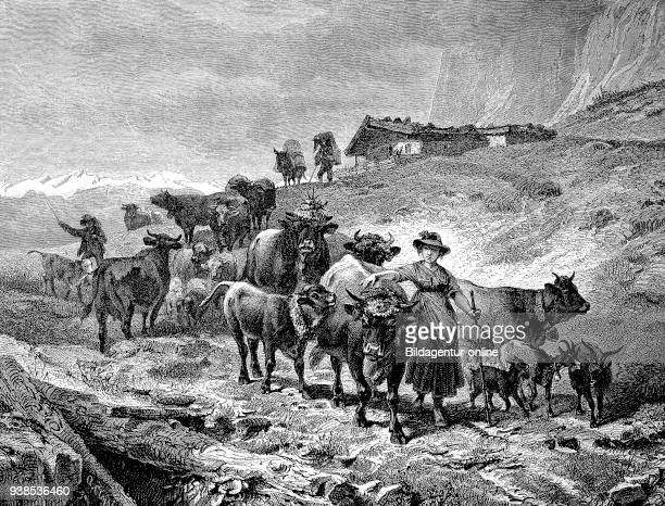 the Almabtrieb Cattle drive in the fall of a mountain pasture in the Alps Austria illustration woodcut from 1880