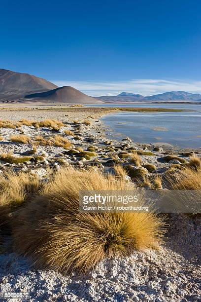 the altiplano at an altitude of over 4000m looking over the salt lake laguna de tuyajto, los flamencos national reserve, atacama desert, antofagasta region, norte grande, chile, south america - antofagasta region stock photos and pictures