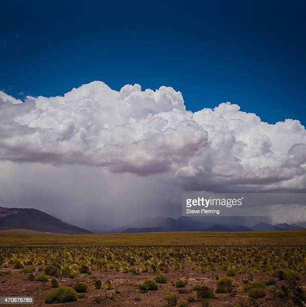 The Altiplano in the Atacama Desert is at 3000 metres. An amazing landscape with summer vegetation showing. It is a land of volcanoes and lagunas...