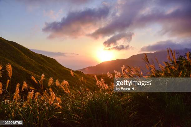 the amazing valley full of miscanthus in fall. and on the left side is the waste copper pipe all the way up to the hill - yangmingshan national park , taiwan. - taipei foto e immagini stock