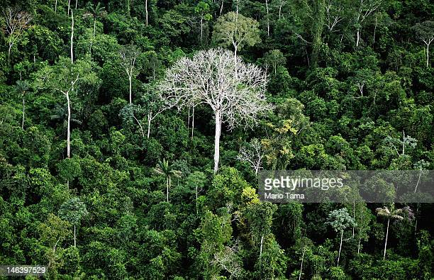 The Amazon rainforest is seen near construction of the Belo Monte dam complex in the Amazon basin on June 15 2012 near Altamira Brazil Belo Monte...