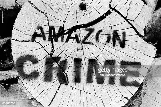 The Amazonian rainforest the world's largest is under siege from illegal loggers who export its hard woods to the US Italy France UK China and Japan...