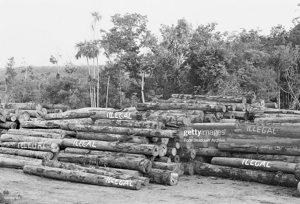 Amazonian Rainforest : News Photo
