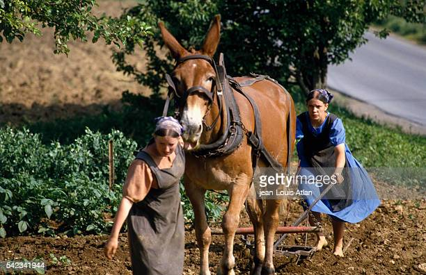 The Amish are a tightknit cultural and ethnic group with SwissGerman origins Anabaptists they are noted for their restrictions with regard to modern...