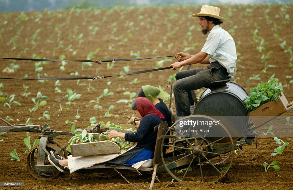 The Amish of Pennsylvania : News Photo