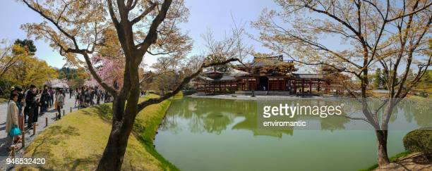 the ancient byodo-in temple in kyoto, japan, viewed through beautiful pink blossoming sakura (cherry blossom) trees during spring time. - uji kyoto stock pictures, royalty-free photos & images