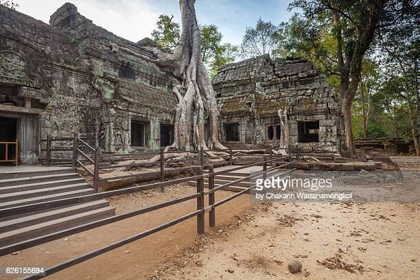 The ancient ruins of Ta Prohm Temple (Angkor).