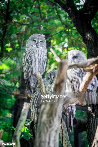 the animals of prague zoo - czech hunters stock pictures, royalty-free photos & images