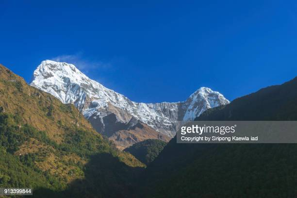 The Annapurna South (7,291 m.) and Hinchuli peak (6,441 m.) in the morning from Ulleri, Nepal.