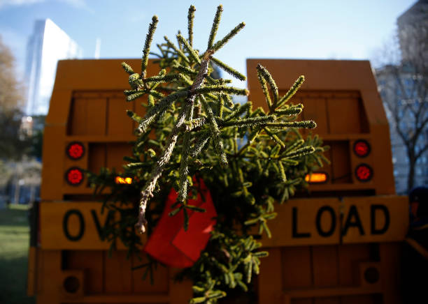 annual christmas tree gift from nova scotia arrives in boston - An Evergreen Christmas