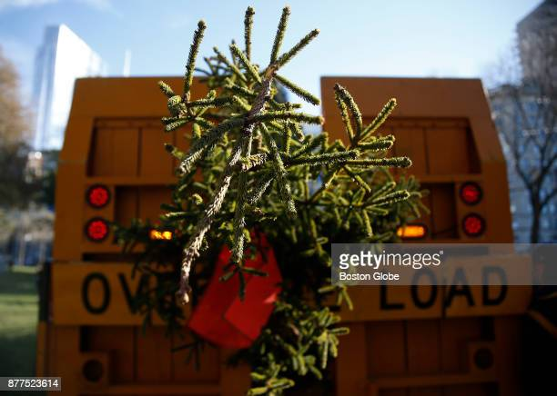 The annual gift of an evergreen Christmas tree from Nova Scotia arrives on the Boston Common on Nov. 21, 2017. This year commemorates 100 years of...