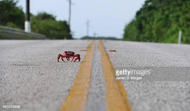 The annual red crab migration on Christmas Island on 1 January 2007 in Christmas Island Australia