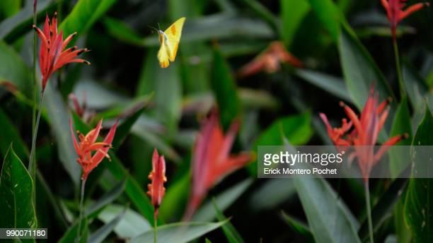 the approach - montero flor fotografías e imágenes de stock